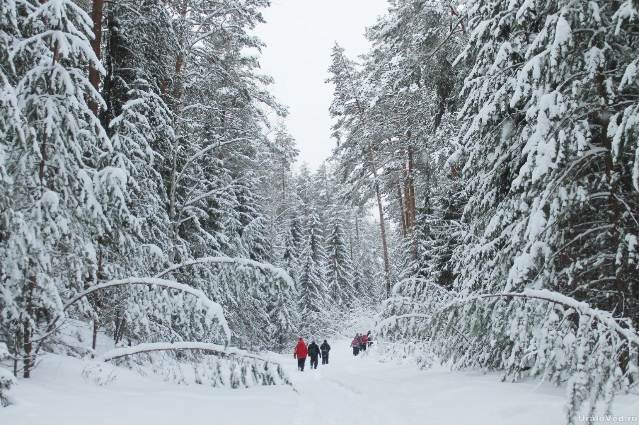 Прогноз погоды на зиму 2019-2020 года: что говорят синоптики из Гидрометцентра, какая будет зима, холодная или нет