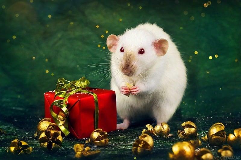 Новый 2020 год Крысы: как встречать правильно, приметы, что должно быть на столе
