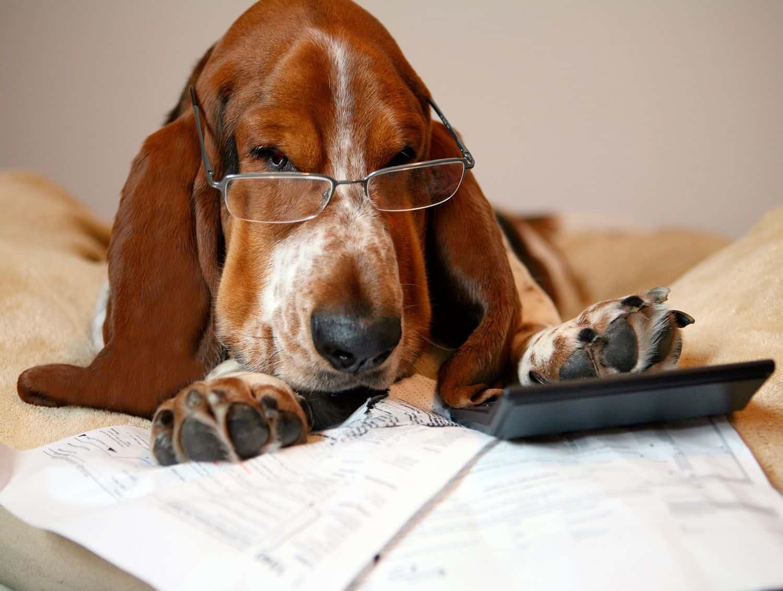 Введение налога на домашних животных в 2019: когда ожидается, во сколько дополнительно обойдется владение кошкой или собакой