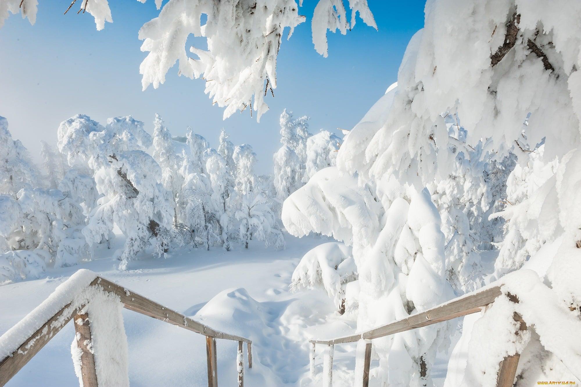 Зима 2019-2020, какой будет по приметам, холодная или нет