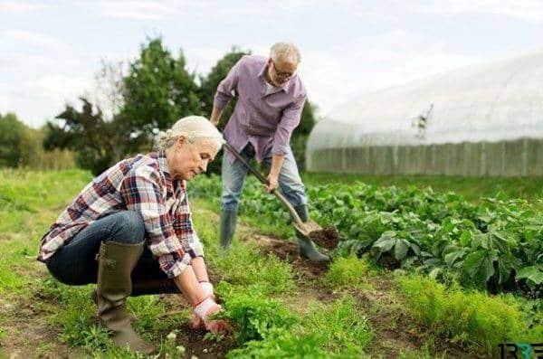 Налоги для садоводов в 2019 году: налог на продукцию садоводов и огородников в 2019 году
