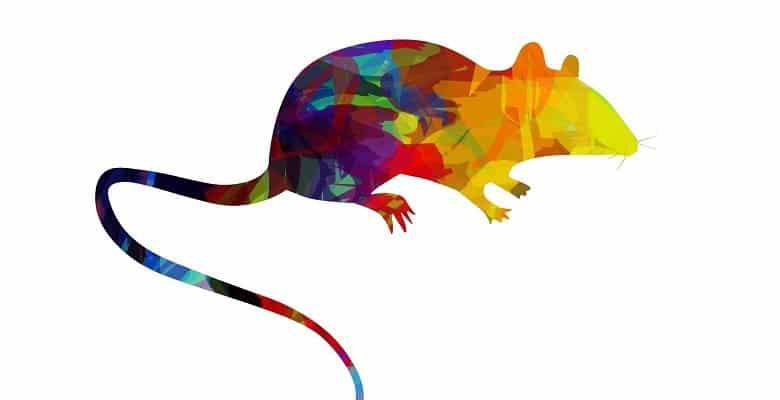 Что рожденным в год Крысы стоит ожидать от 2020 года