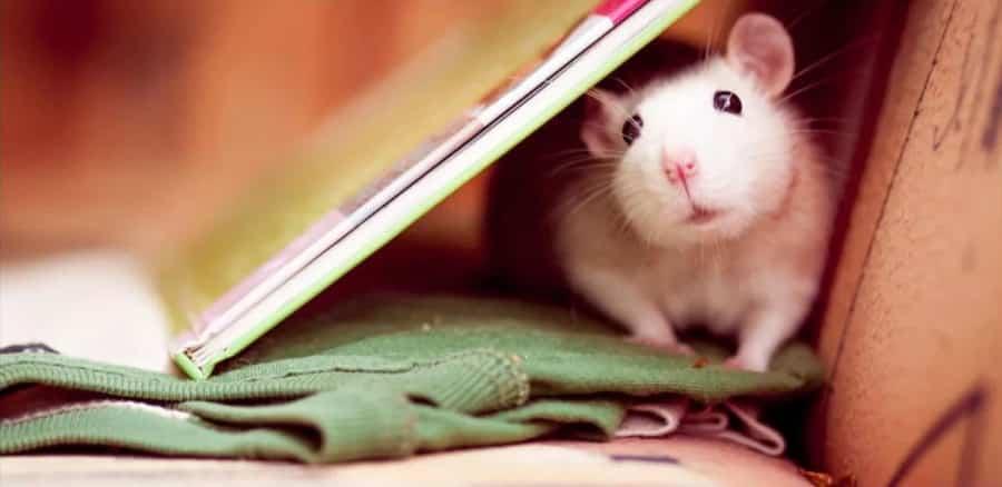 Особенности темперамента людей, которые родились в год Крысы