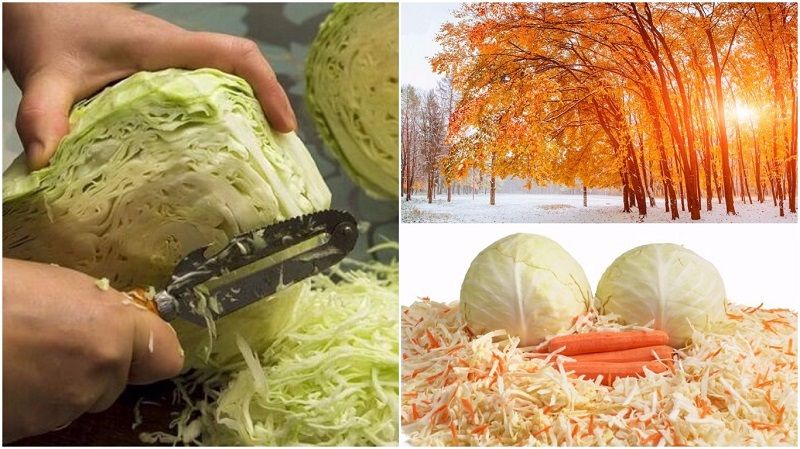 Простые и вкусные рецепты квашенной и соленой капусты в 2019 году
