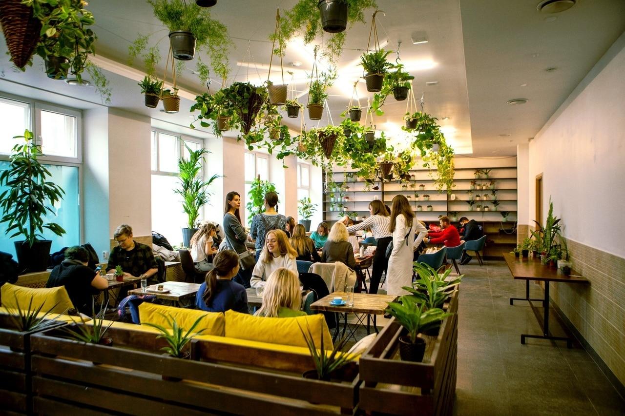 В Петербурге открылось кафе с растительным интерьером и благотворительным уклоном которое никогда не окупится