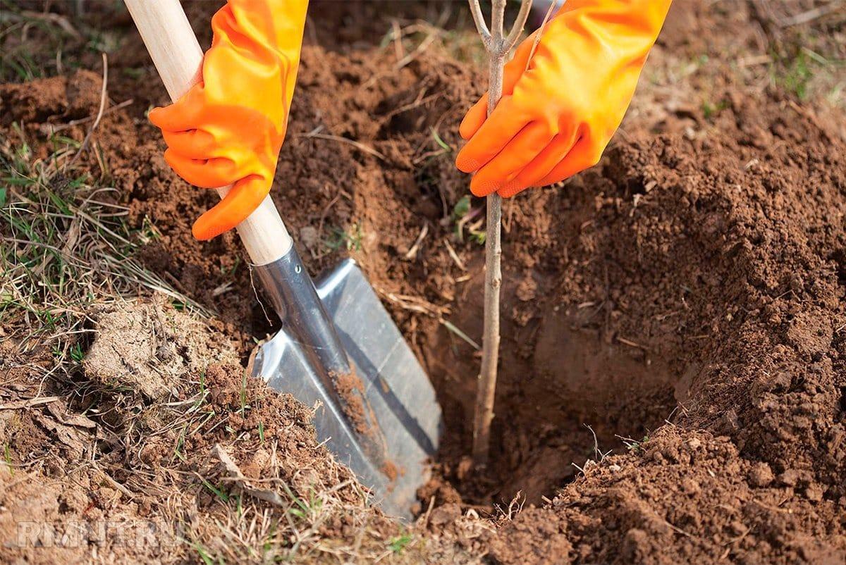 Посадка саженцев осенью 2019: секреты и советы опытных садоводов, преимущества посадки осенью