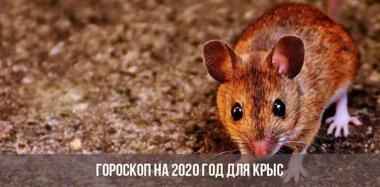 Гороскоп на год Крысы 2020 для всех знаков Зодиака: каким будет 2020 год в любви и бизнесе