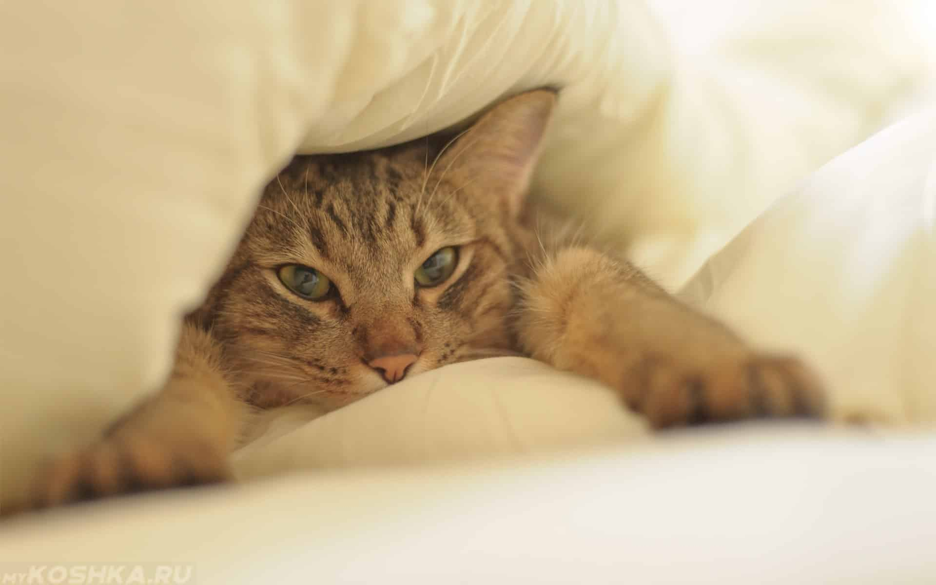 Почему кошки любят спать на кровати: что это означает, можно ли спать с кошкой на одной постели