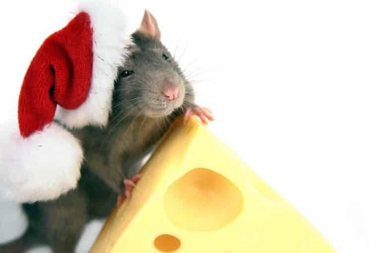 Новый 2020 год Крысы: как правильно встречать, приметы, что должно быть на столе