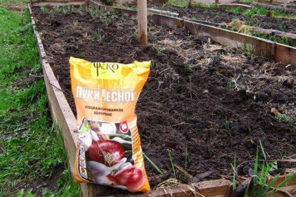 Советы огородников: какое удобрение лучше всего подходит для озимого чеснока