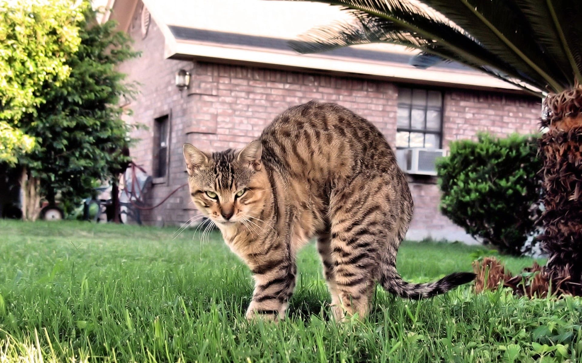 Насколько трудно сделать уличную кошку домашней и всегда ли это возможно?