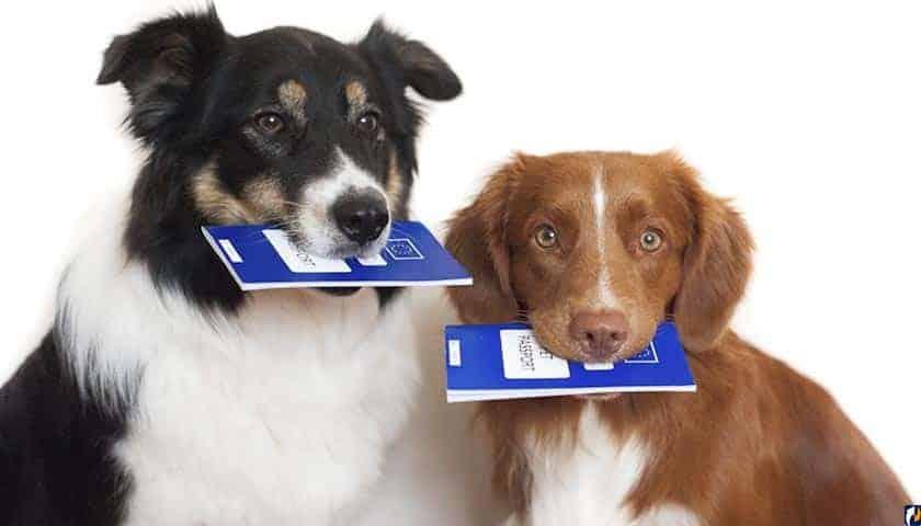Новый закон об обязательной маркировке домашних животных: когда введут, подробности