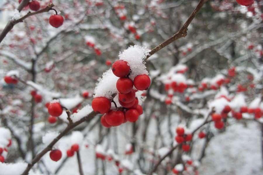 Какая будет погода в декабре 2019 в Москве, Питере и других регионах России