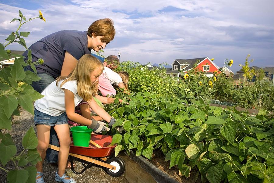 Новые налоговые льготы для дачников и огородников вступили в силу с 29 октября