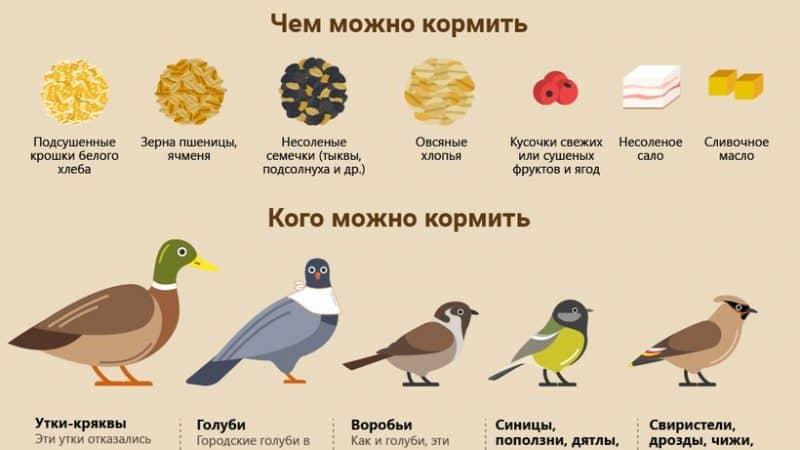 Как помочь птицам пережить жестокую зиму, грамотно их подкармливая?