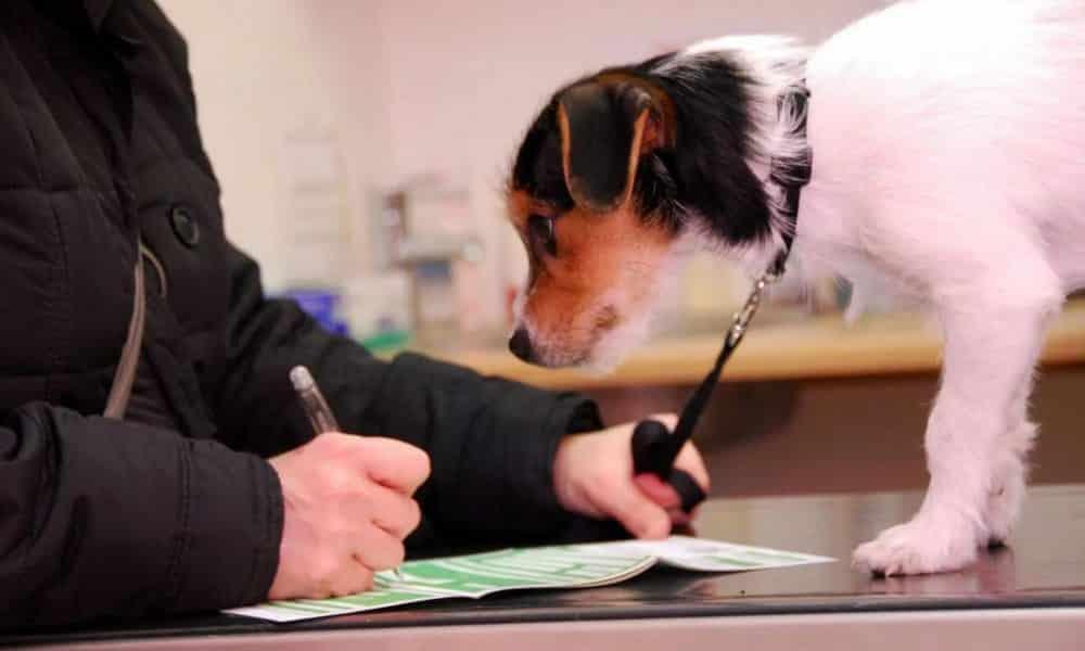 Налог на домашних животных в России: будет ли введён в 2020 году или нет