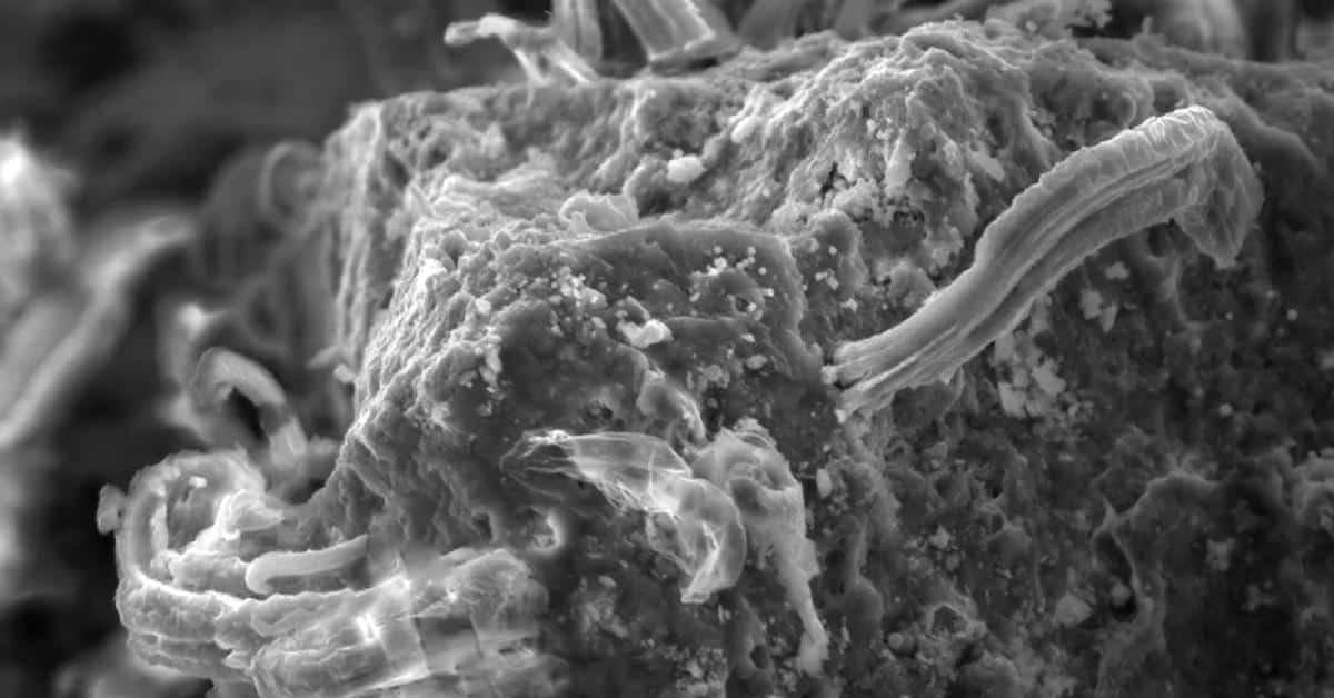 Найдены микробы, которые могут выжить на метеоритах