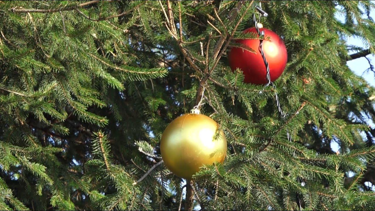 Когда ставить елку на новый год 2020: благоприятные дни