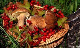 Налог на сбор грибов и ягод появится в России