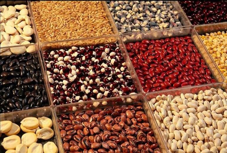 Как вырастить богатый урожай вкусной и полезной фасоли? Пошаговое руководство от выбора почвы до преимуществ фасоли
